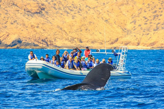 Whale Watching, The Famous Arch and Fast Boat Tour in Los Cabos