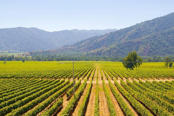 Colchagua Full Day Wine Tour: Casa Silva & L'Apostolle Wineries