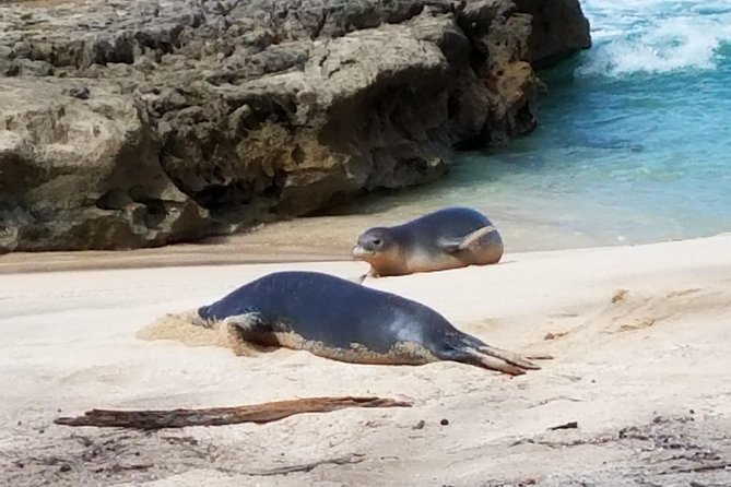 Learn Hawaiian Monk Seal Tours on Oahu