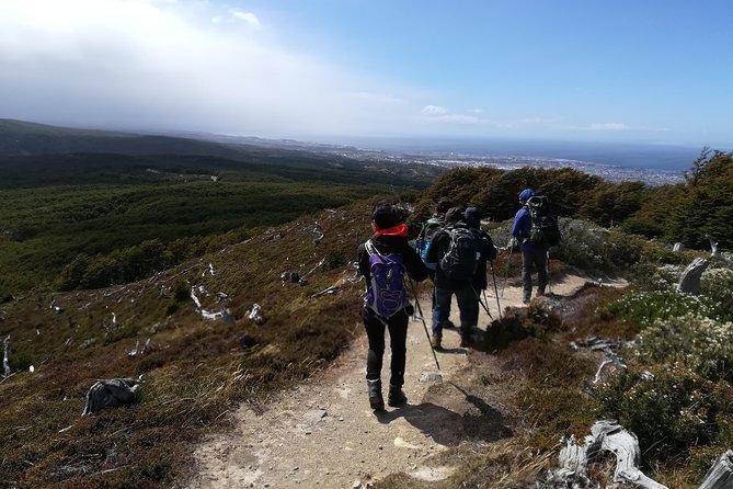 Caminhada na floresta da Patagônia