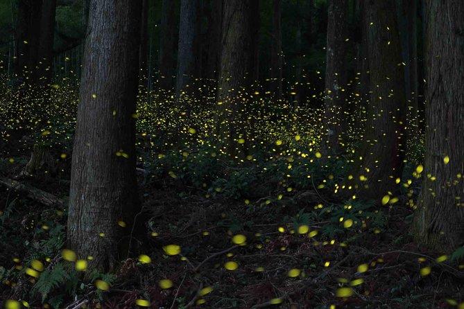 Fireflies & KLCC Lake Symphony Tour from Kuala Lumpur