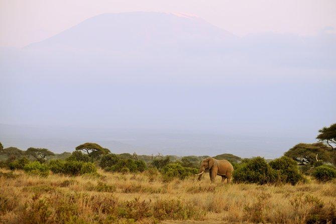 Amboseli 2 night budget safari