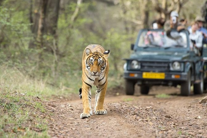 8 Days Private Golden Triangle Tour With Ranthambore