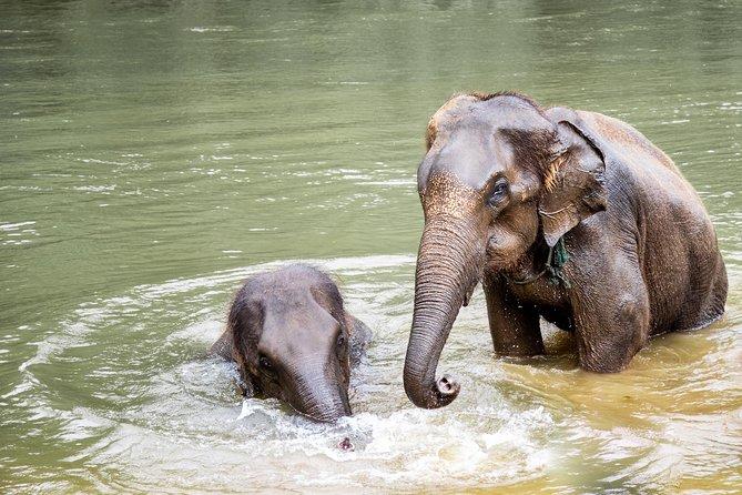 Kanchanaburi Local Cuisine and Elephant Care