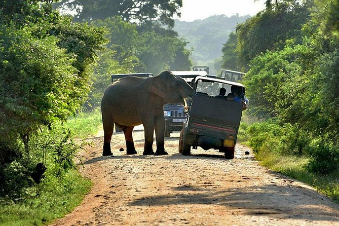 yala Safari Tours