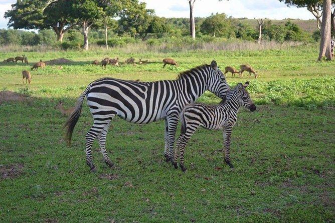 A private tour to Coron Calauit Safari Tour