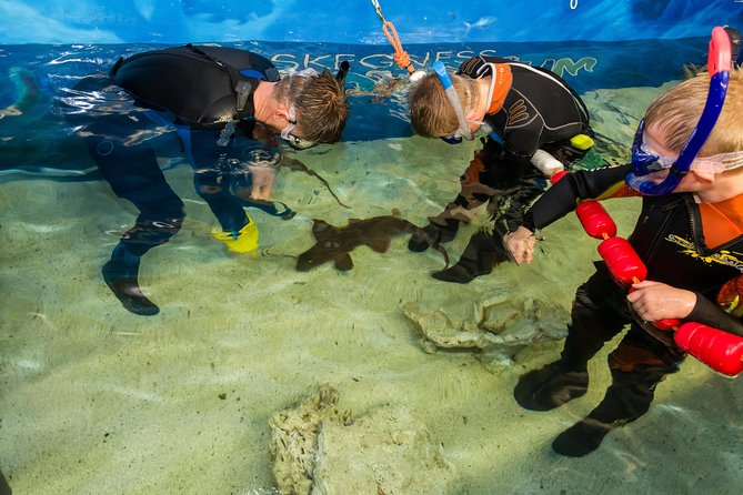Skip the Line: Skegness Aquarium Shark Snorkelling Ranger Experience Ticket