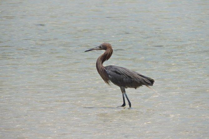 Pelagic Birding Isla Blanca Cancun Mexico