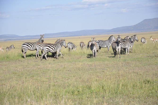 3 Days Best Tanzania Safari photo 6