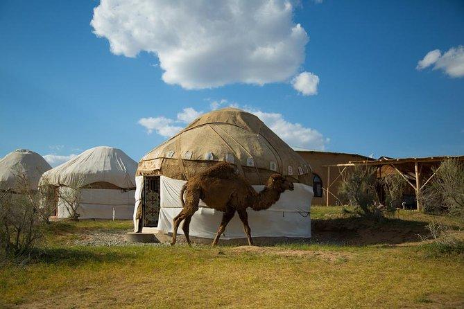 Tour to Desert Yurt Camp