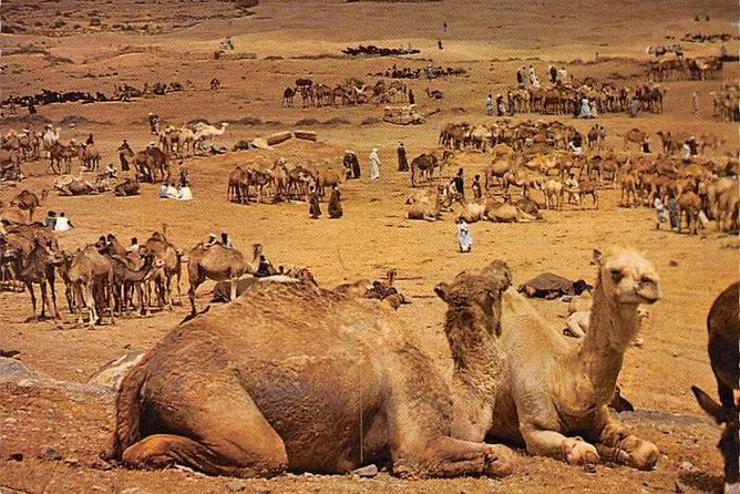 From Agadir: Saturday Weekly Camel Market (6am - 6pm 00)