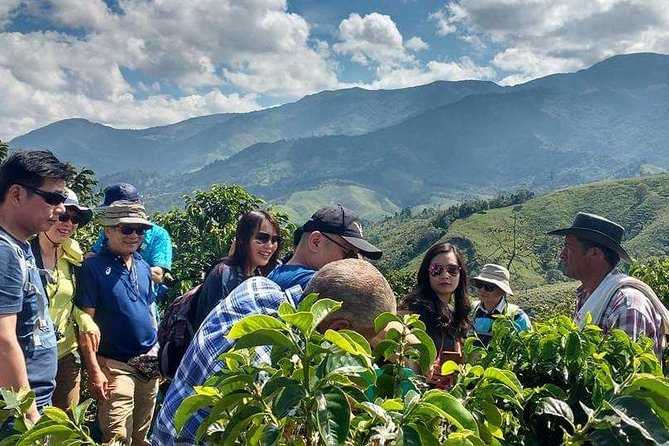 Coffee Tour at Traditional Coffee Farm with amazing Landscapes.
