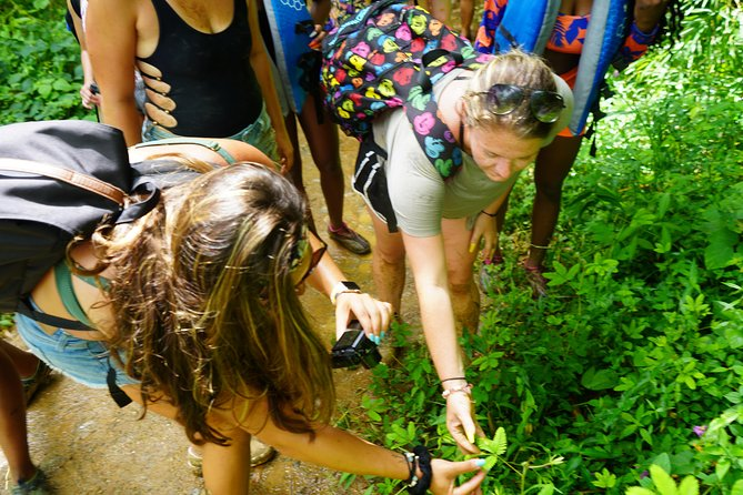 Rainforest Small group Off the Beaten path with Lunch El Yunque
