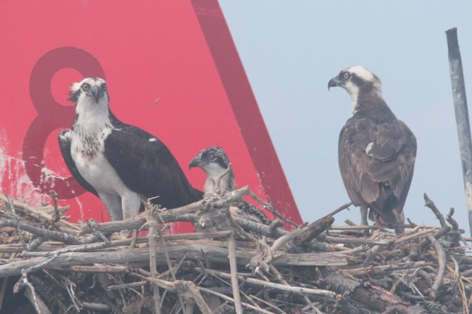 Birding By Boat on the Osprey