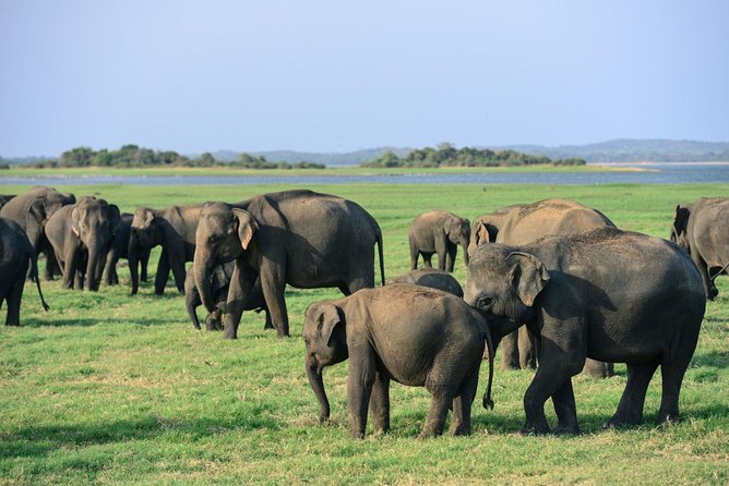 Day Tour / Day Excursion - Jeep Safari, Kaudulla National Park