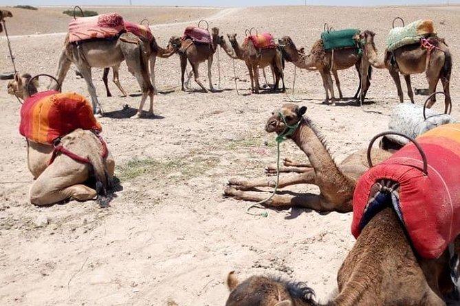 Sunset camel ride Agafay desert Marrakech