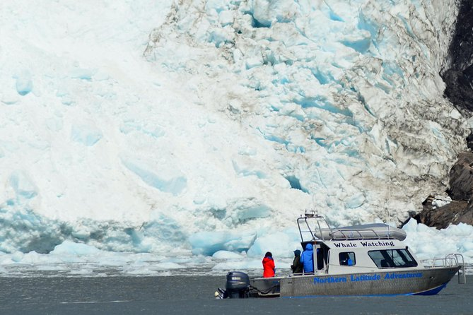 6 Guest Max - Glacier & Wildlife Cruise to Kenai Fjords National Park (Full Day)