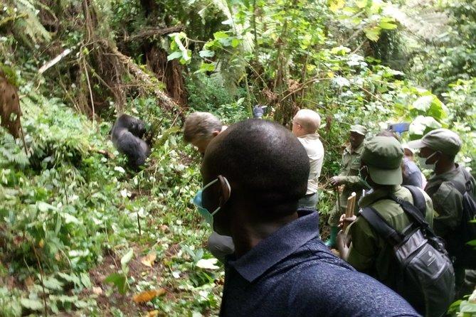 Lowland Gorilla Trekking Kahuzi Biega National Park