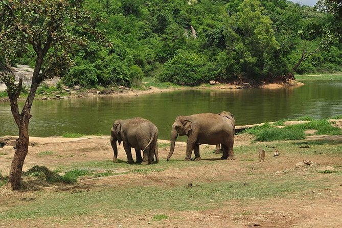 Bannerghatta National park (Pickup from hotel)