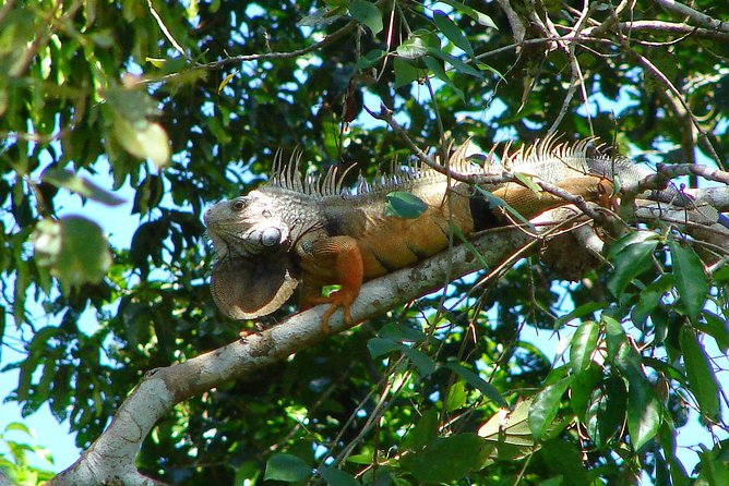 Panama City Metropolitan Park Trail Tour