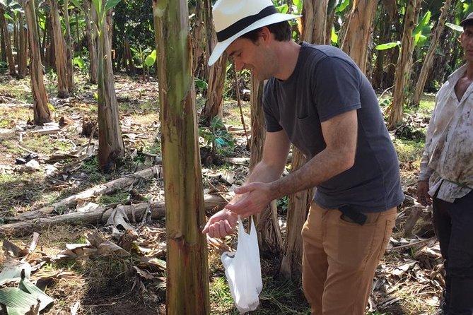 Finca El Diamante - Rural Accommodation And Tour Del Banana