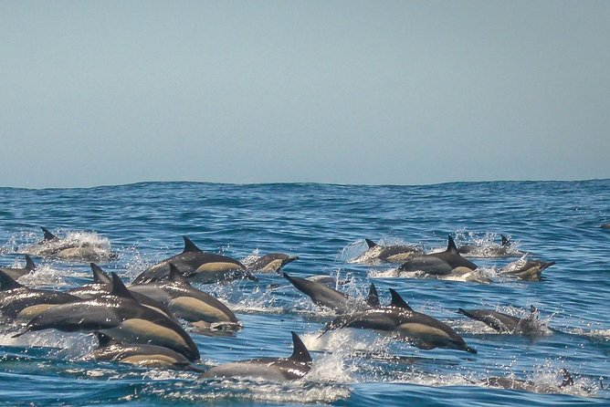 Dolphin and Snorkeling