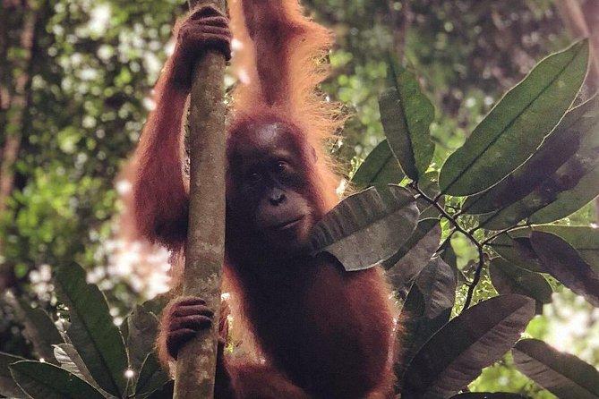 Bukit Lawang Full Day Jungle Trek