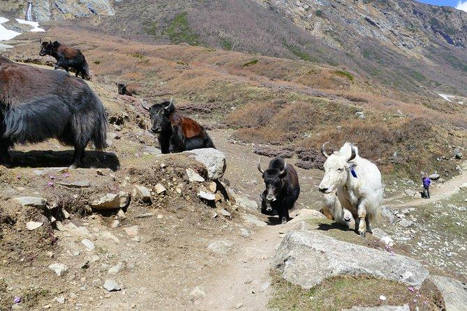 Manaslu Circuit Trek - Untouched trail