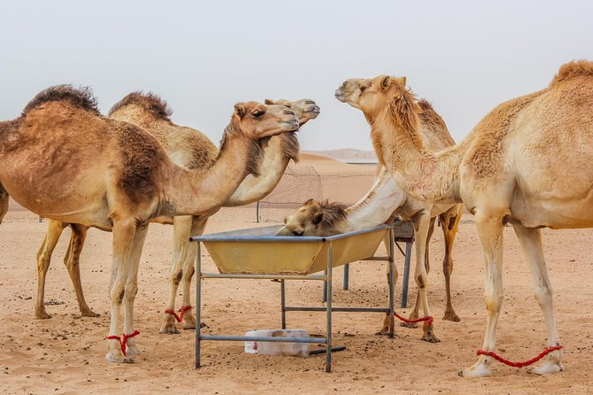 Dubai Combo:City Sightseeing Tour and Premium Desert Safari with all Activities photo 19