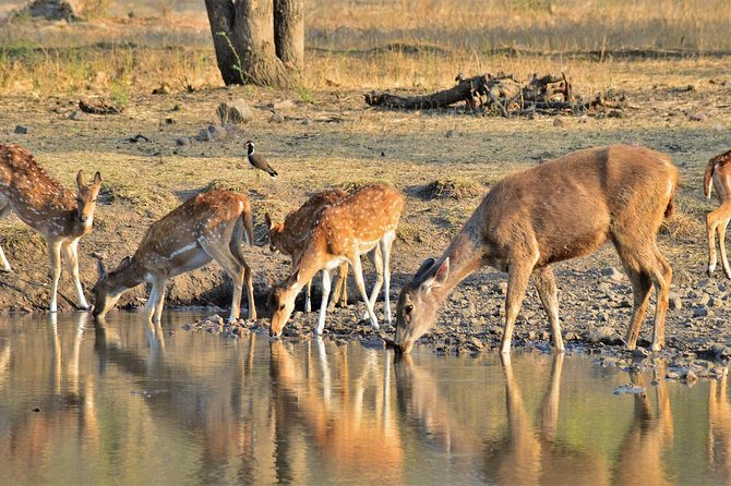 From Jaipur: Ranthambore National Park- 3 hour Jeep or Canter Safari