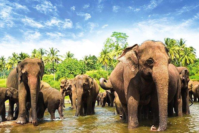 Delight Of Ceylon Tour ( 2 Nights / 3 Days)
