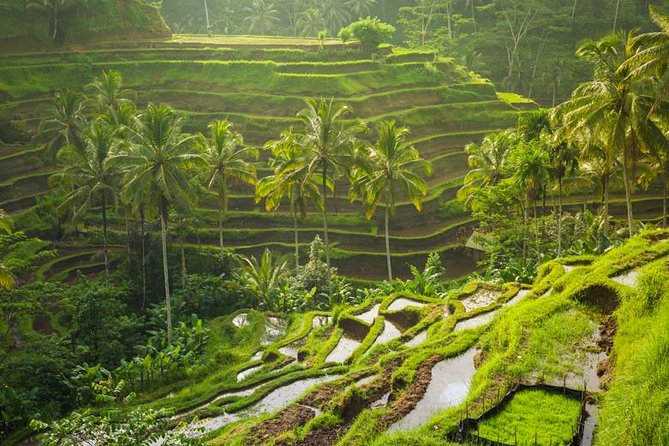 Bali North Tour