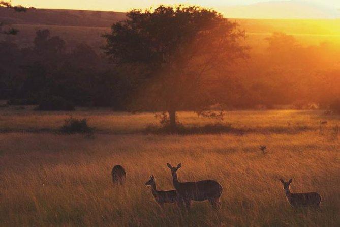 11 Days Uganda Safari Adventure