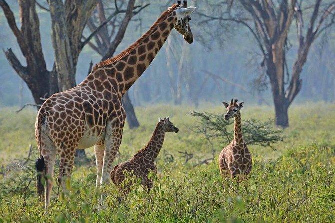 Ultimate Kenya Uganda Safari for Women
