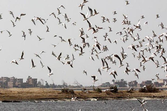 Fayoum Full Day tour Bird Watching photo 6