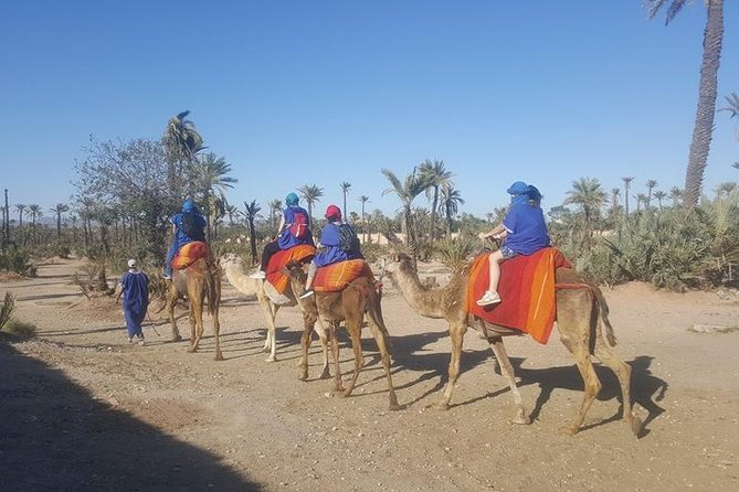 camel ride marrakech at the palm grove