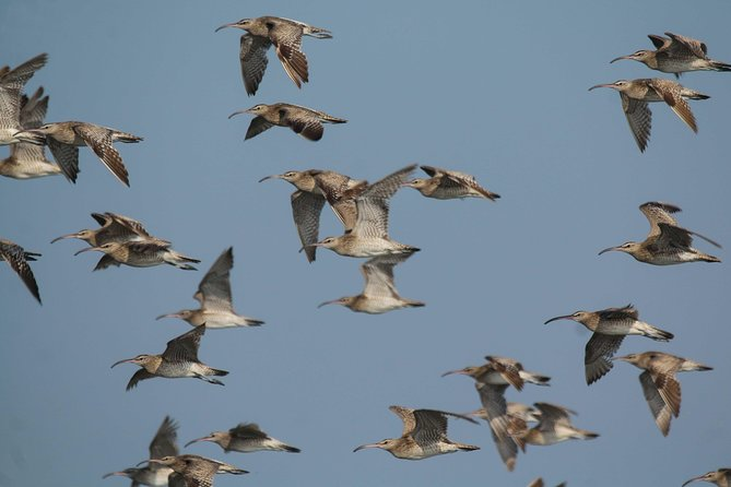 Birding in Surabaya