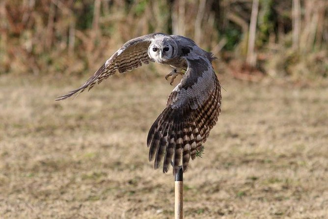 Bird Watch Safaris With H.T.T