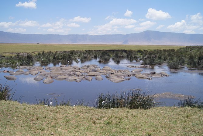 Hippo pool and mountain view