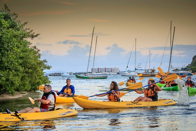 Rainforest Nature Walk & Bio Bay Night Kayaking Combo with Transportation