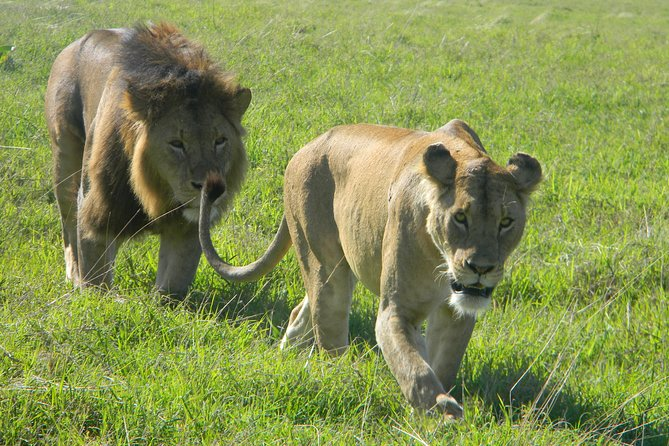 Tanzania Wildlife Photography Safari | 14 Days