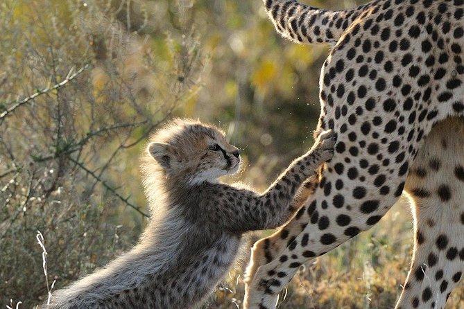 Ngorongoro Crater & Serengeti Migration | 5 Days