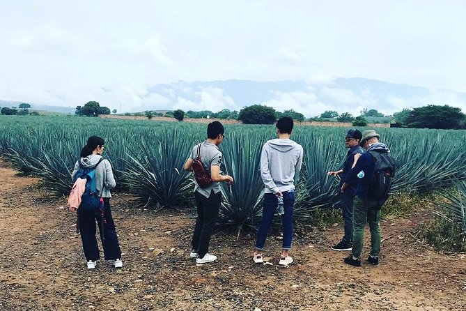 Private Tequila Route Tour with a Local Expert