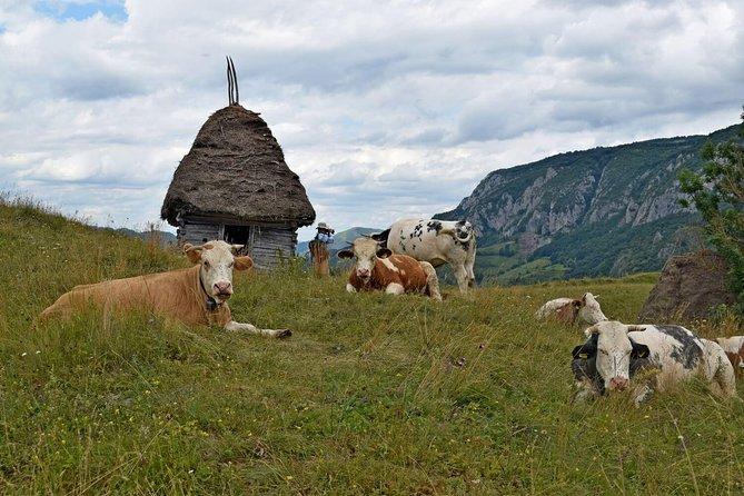 Apuseni day hike: Salciua (1 day, from Cluj-Napoca)