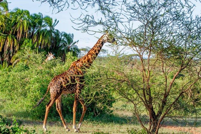 6 Days Luxury Northern Circuit Safari - A Glimpse of Tanzania Adventure