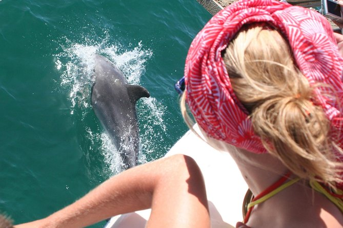 Dolphin watching in the wild photo 3