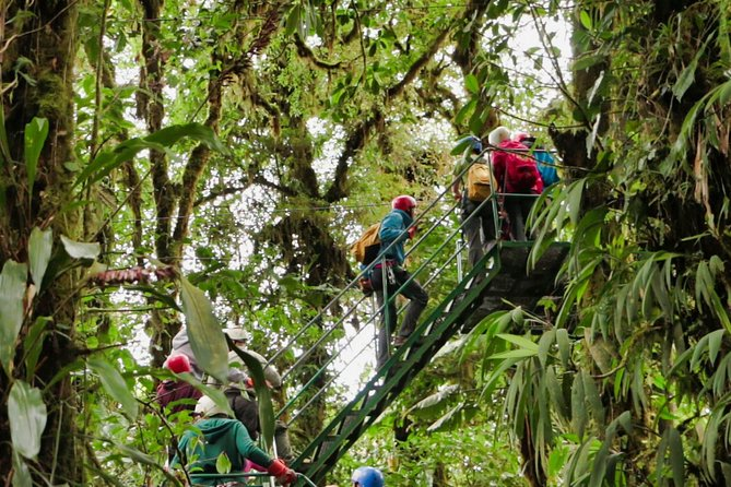Rainforest Canopy Zipline & Hanging Bridges Tour From Monteverde