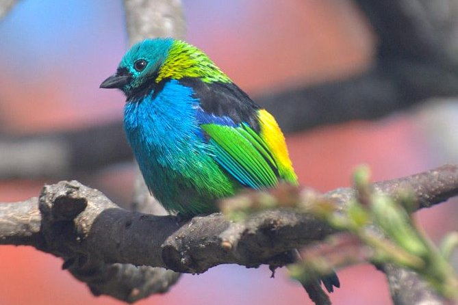 Birdwatching tour to Tijuca National Park with Pica-pau Tours