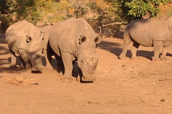 Game Drive and Rhino Walk Safari