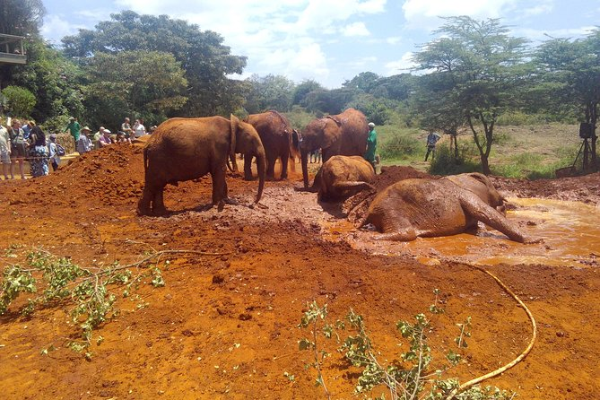 David Sheldrick Wildlife Trust and Kibera Slum Tour from Nairobi